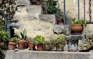 Zun bedrukt Planten