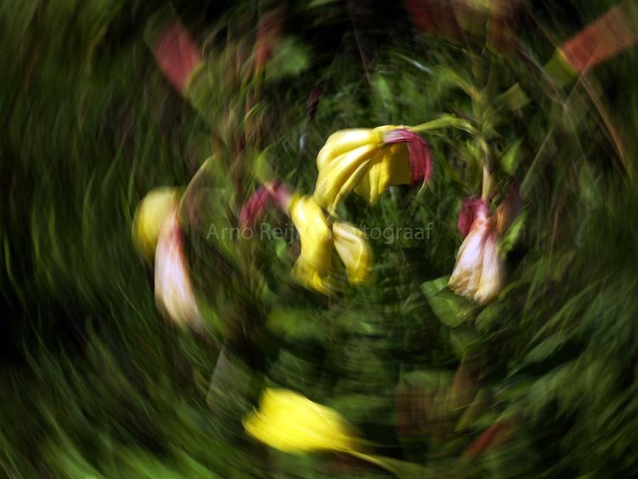 Zun bedrukt Tulpen 4