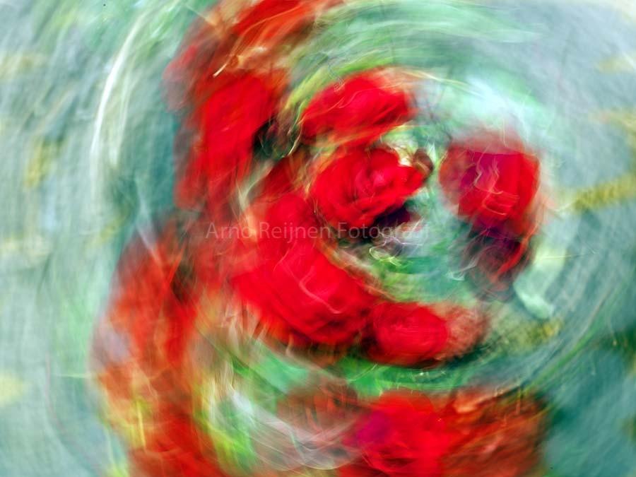 Zun bedrukt Tulpen 5