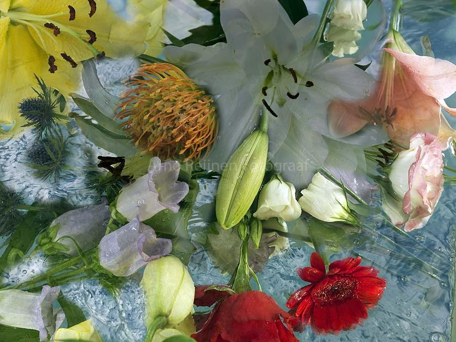 Zun bedrukt Bloemen 5