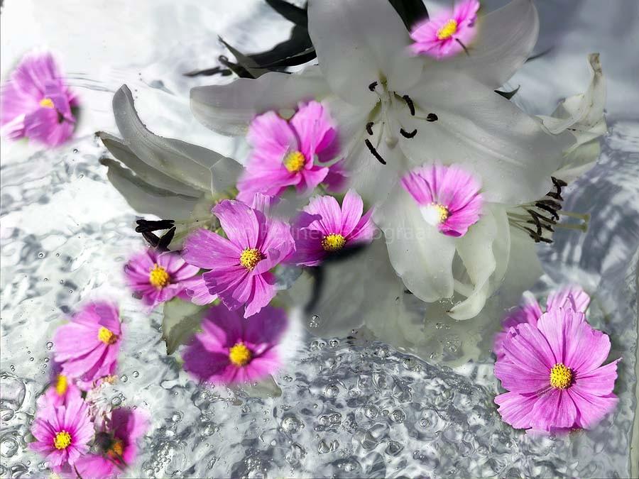 Zun bedrukt Bloemen 6