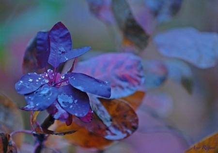 Zun bedrukt Bloemen 7
