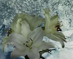 Zun bedrukt Bloemen 8